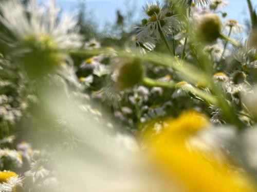 Vrt karizmatičnih rastlin